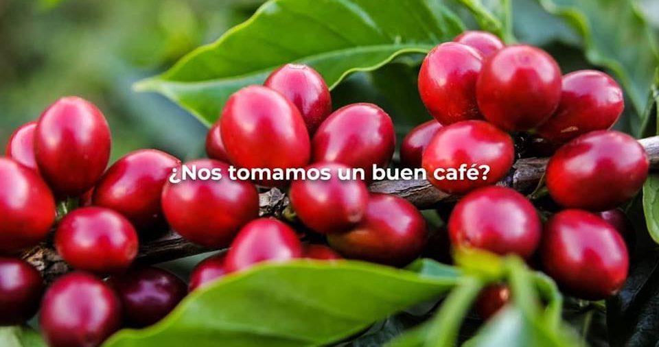 CAPÍTULO XII: EL COMIENZO DEL CAFÉ EN EL QUINDÍO